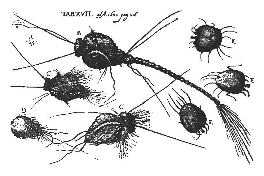 Dr. Michel Ettmuller's drawing (1682)